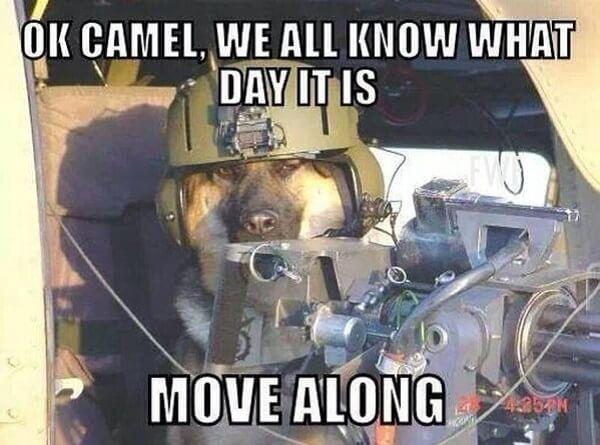 hump day mem move along