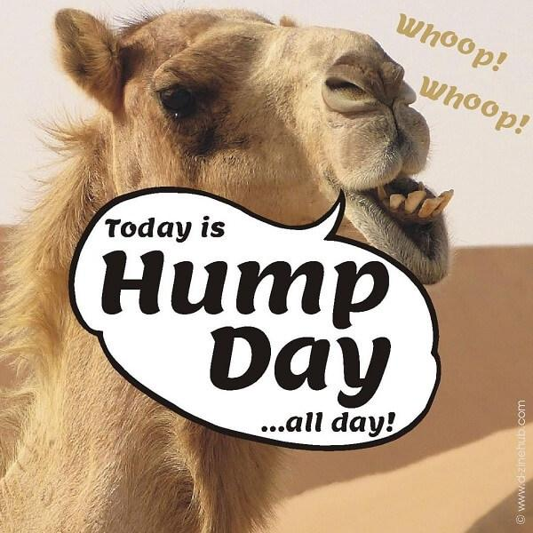 hump day meme all day!