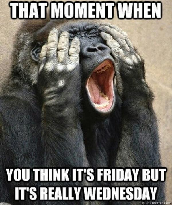 hump day meme it thought it was friday