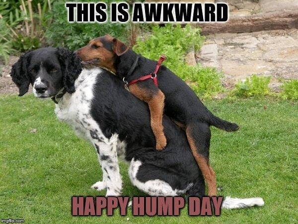 hump day meme this is awkward
