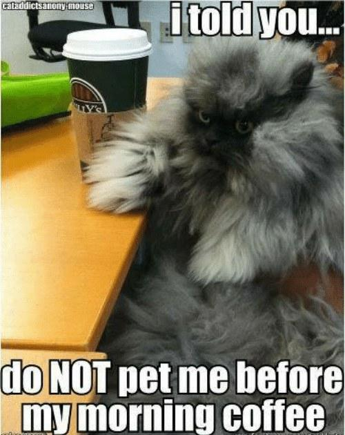 i-told-you-cataddictsanomy-mouse-do-not-pet