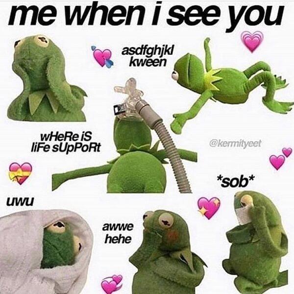 kermit love memes
