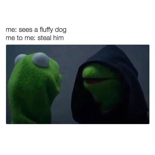 kermit meme fluffy dog