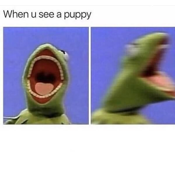 kermit meme when you see a puppy