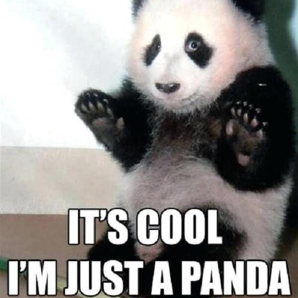 panda memes funny its cool im just a panda