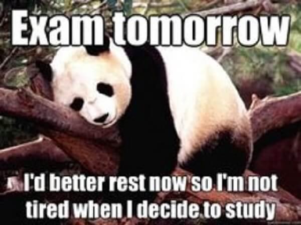 panda memes funny