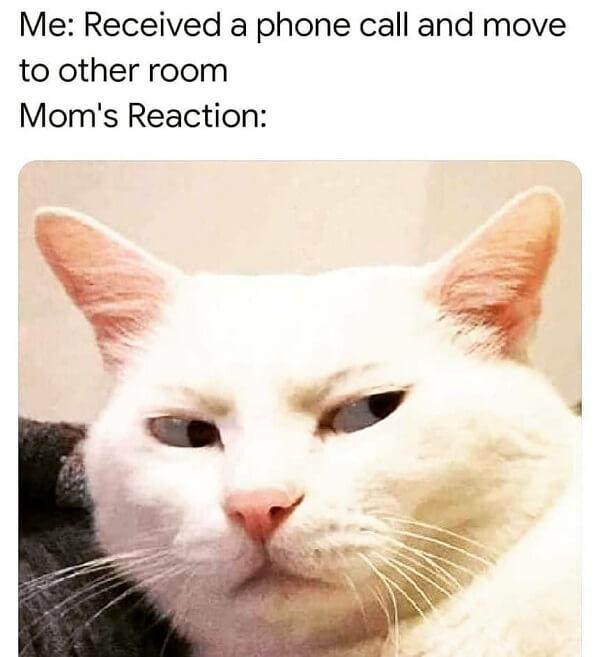 pet memes me received a phone call and move to the other room