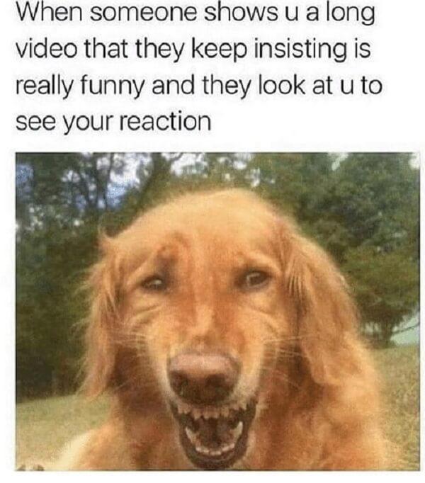 pet memes when someone shows u a long video