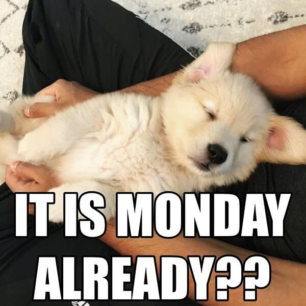 puppy meme its monday already
