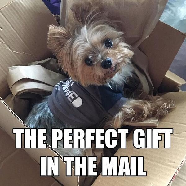 puppy meme perfect gift