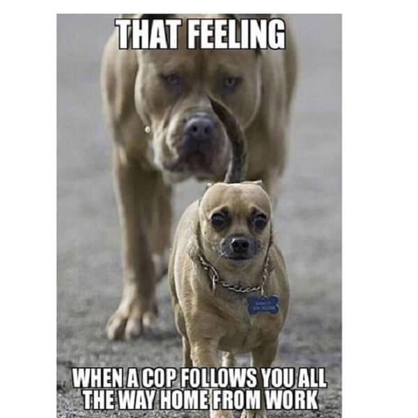 puppy memes cop follow you