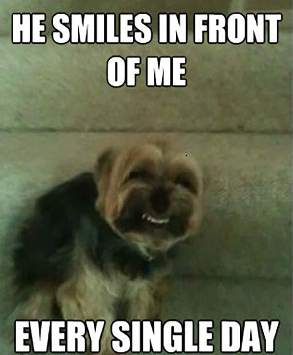 smiling dog meme every single day