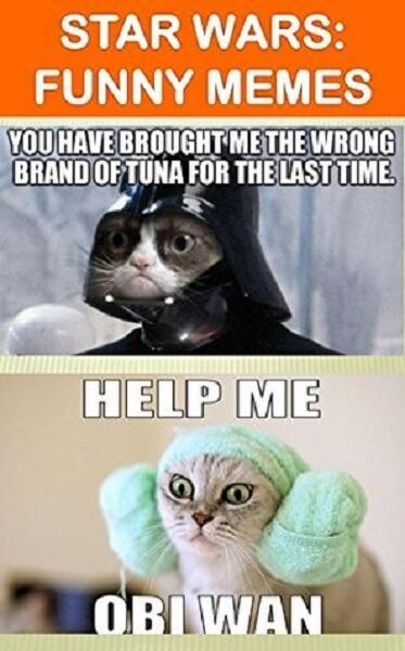 star wars memes cat