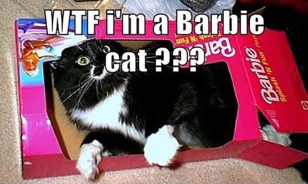 wtf cat meme funny