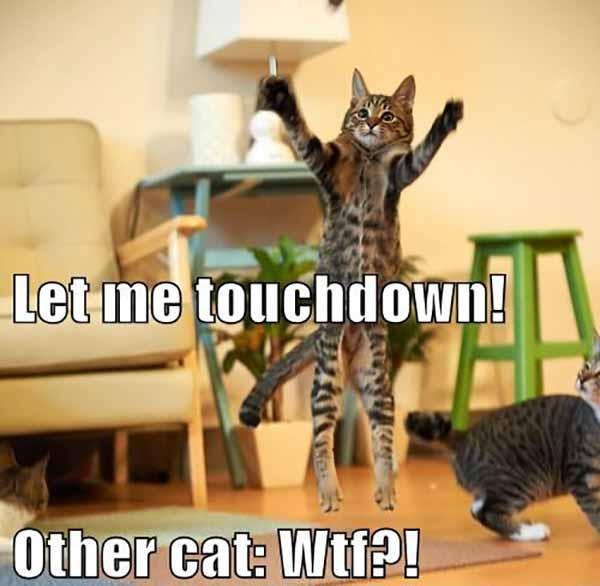 wtf cat meme let me touchdown