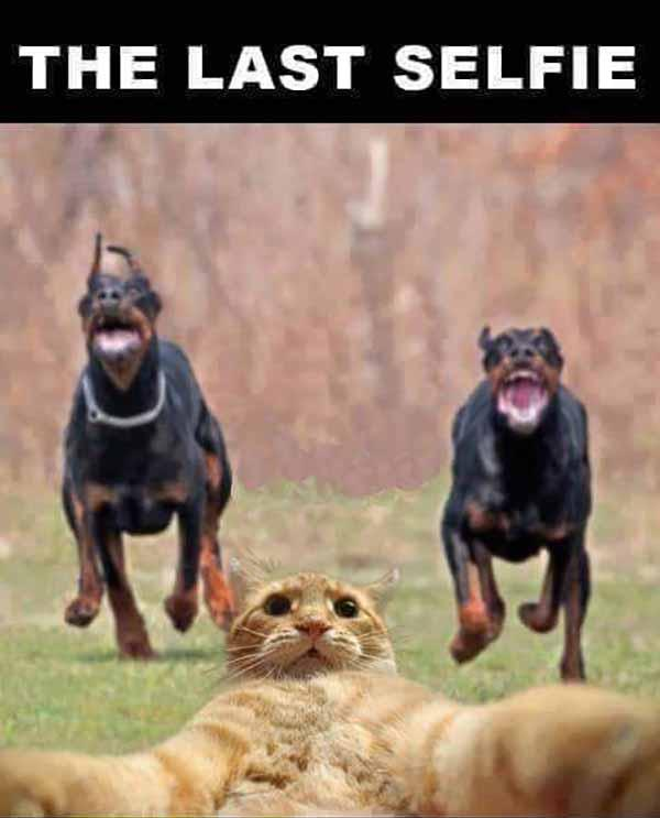 wtf cat meme the last selfie