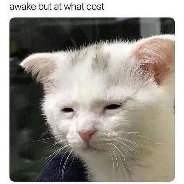 cat memes clean awake but at what cost