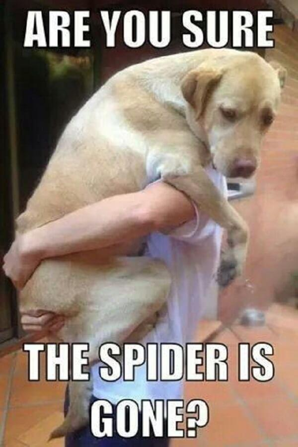 dog memes clean are you sure the spider is gone