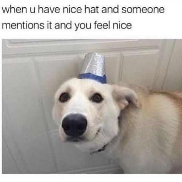 dog memes clean