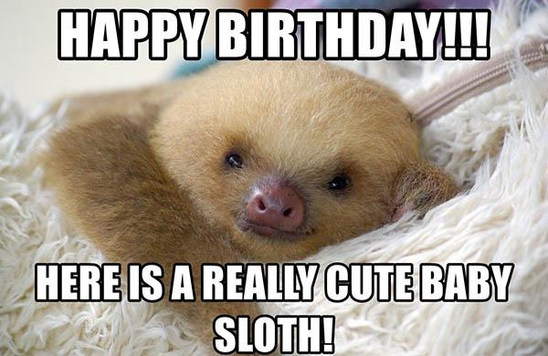 sloth birthday meme cute baby sloth