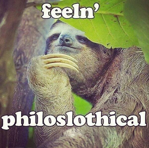 sloth meme feeln philoslothical