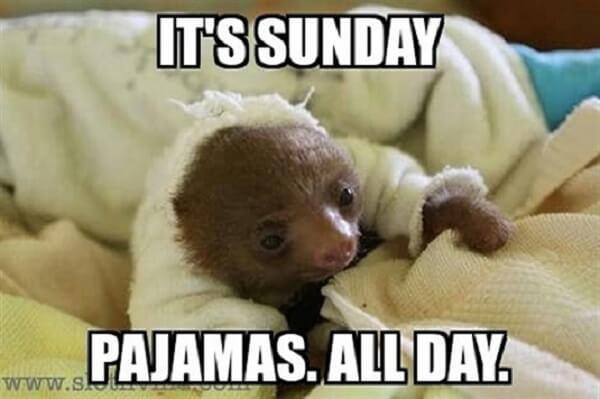sloth meme its sunday pyjamas all day