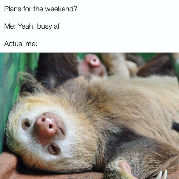 sloth meme plan for this weekend