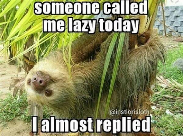 sloth meme someone call me lazy today i almost replied