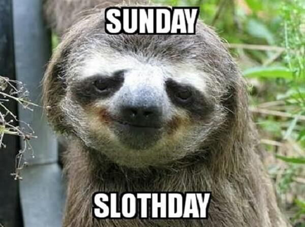 sloth meme sunday sloth day