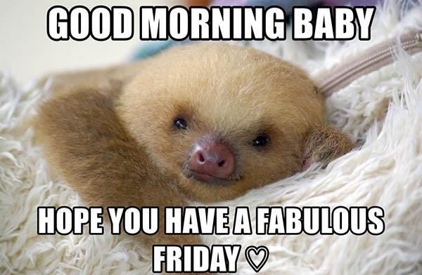 sloth memes clean good morning baby