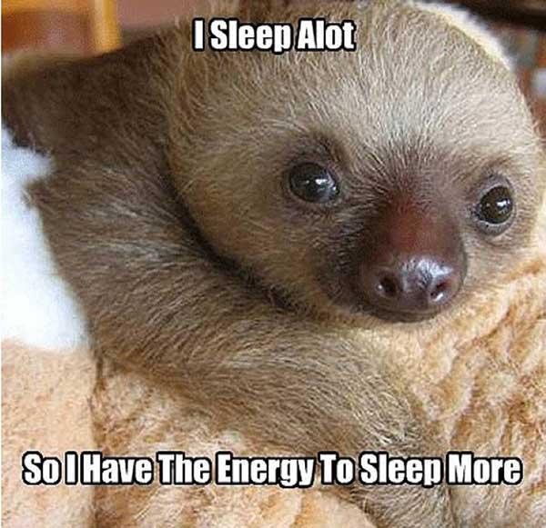 sloth memes clean i sleep a lot