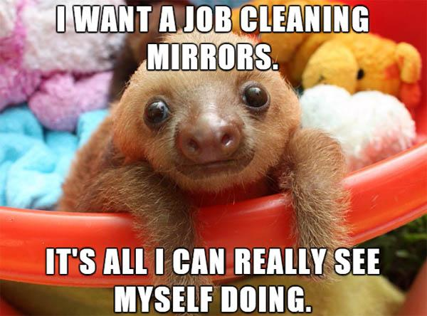 sloth memes clean i want a job cleaning