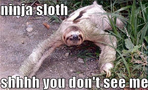sloth memes clean ninja sloth