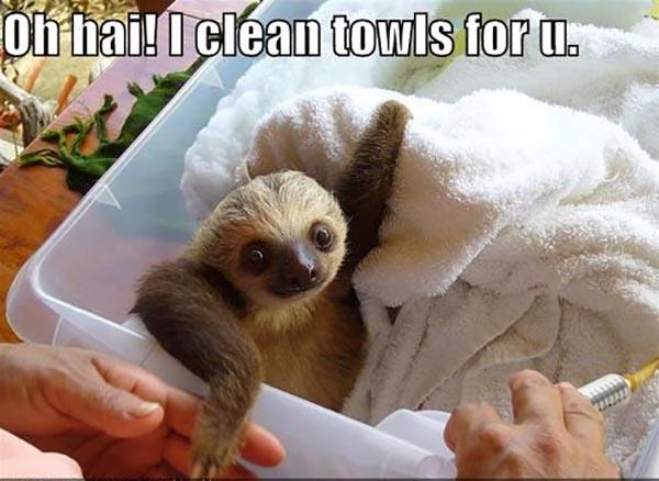 sloth memes clean