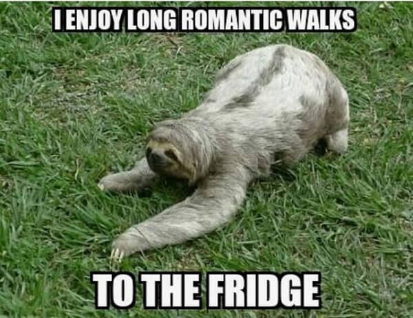 sloth memes i enjoy long romantic road