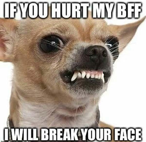 Angry-Dog-Meme-If-you-hurt-my-bff-I-will-break-your-face