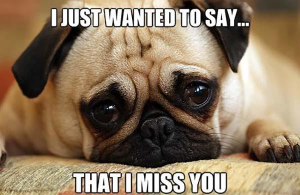 Funny I Miss You Memes And Images For Him