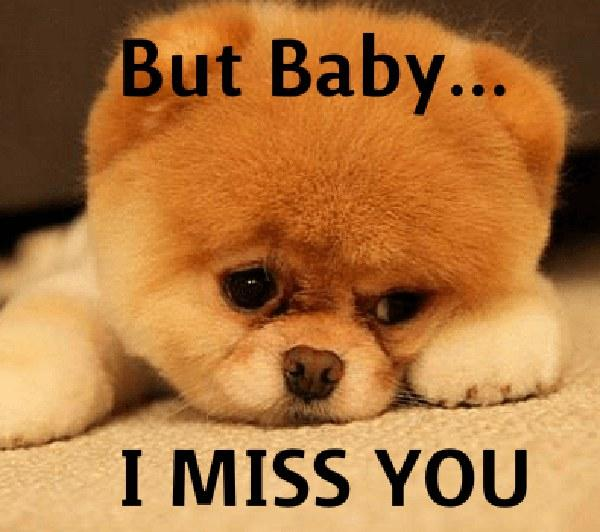 I-miss-you-cute-dog-meme