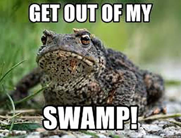 angry frog meme