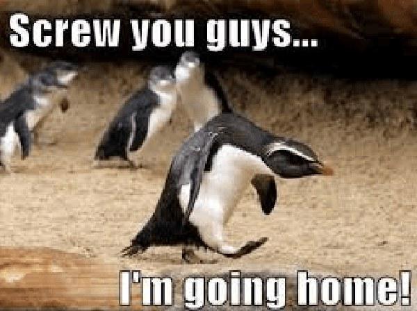 angry penguin meme