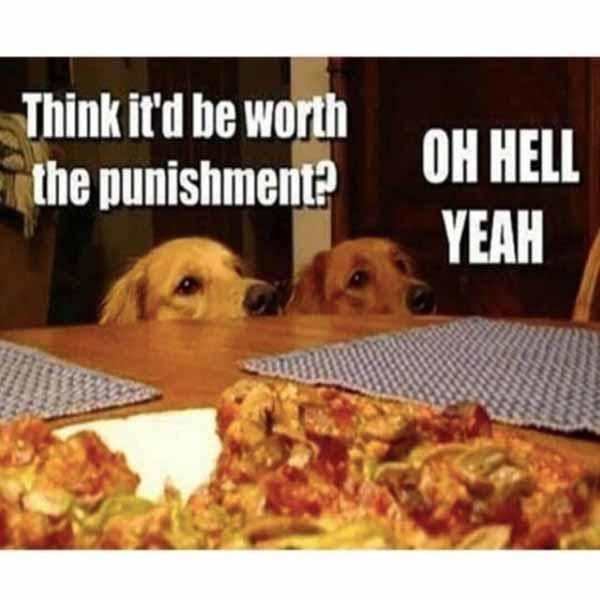 dog pizza meme