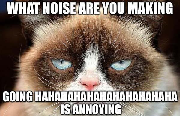funny angry cat noises memes