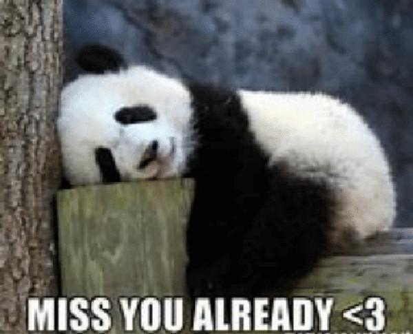 i miss you already meme