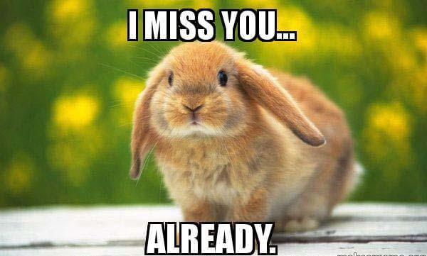i-miss-you-already rabbit