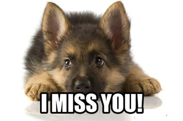 i miss you dog