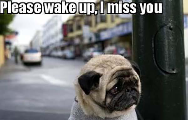 please wake up i miss you