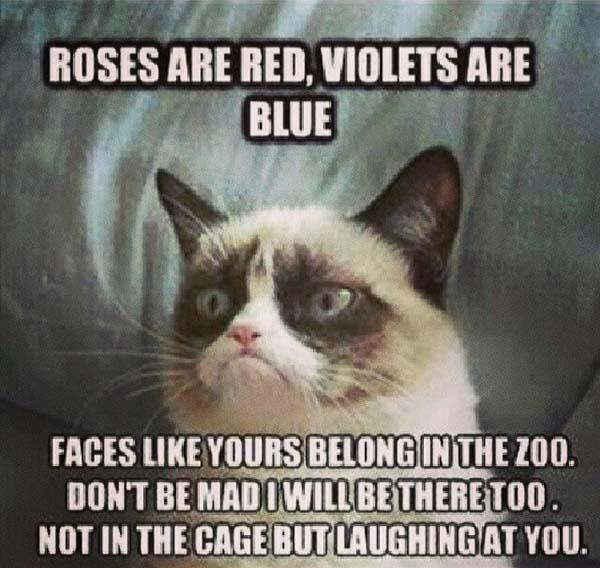 roses are red violet are blue angry cat meme