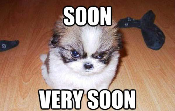 soon very soon angry dog meme