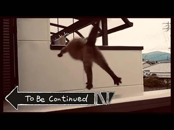 to be continued meme cat