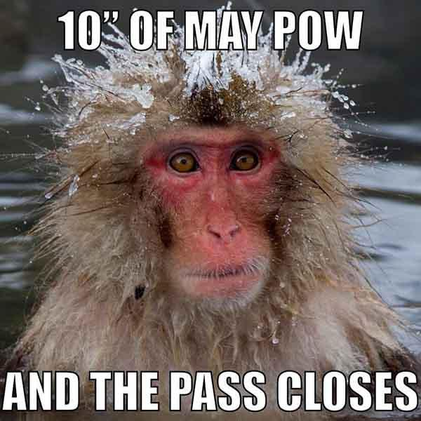 10' of may pow and the pass closes - snow meme